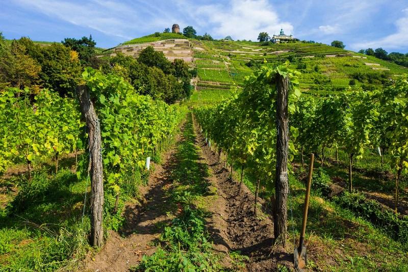 Einladung zum Weinreisen