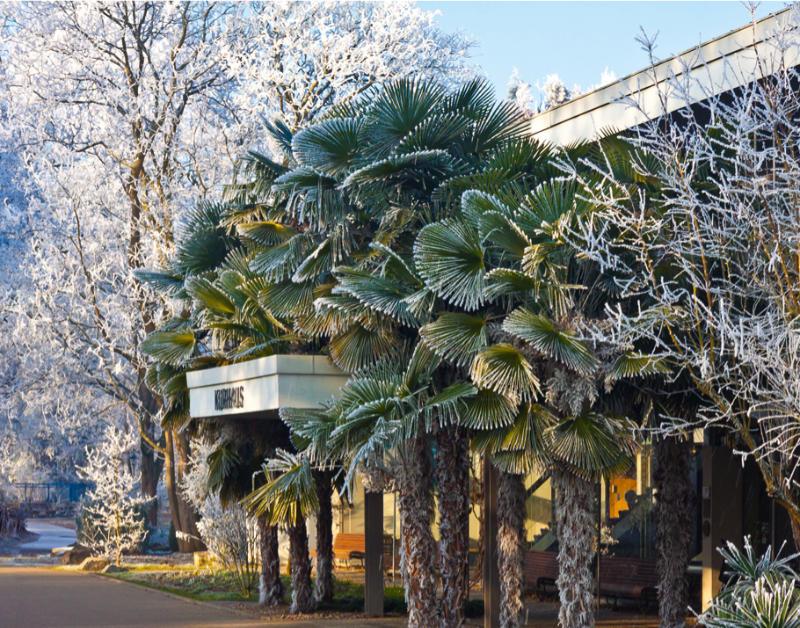 Neuer Bildband Bäume - Faszination Kurpark Bad Krozingen