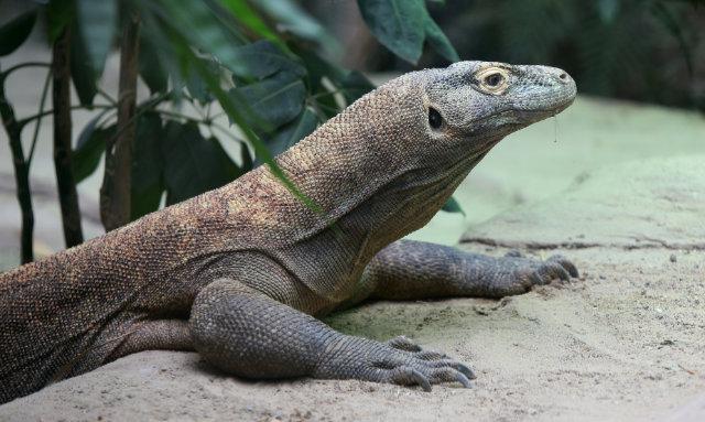 Entdeckertage im Zoo Leipzig - Den Raubtieren auf der Spur