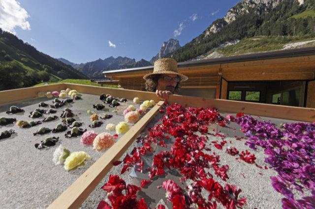 Südtirols Kräuter-Expertinnen von Roter Hahn