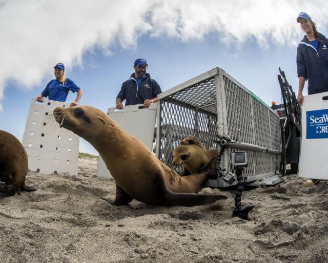 SeaWorld - seit 55 Jahren Einsatz für bedrohte Meerestiere