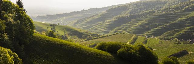 Kaiserstuhlpfad als einer der schönsten Wanderwege Deutschlands ausgezeichnet