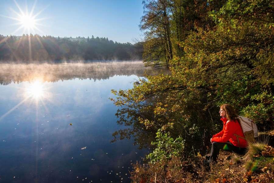 Den Mythos Wald im Sauerland erleben