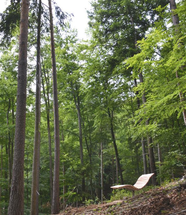 Waldbadepfad im Gemeindewald Bad Krozingen eröffnet