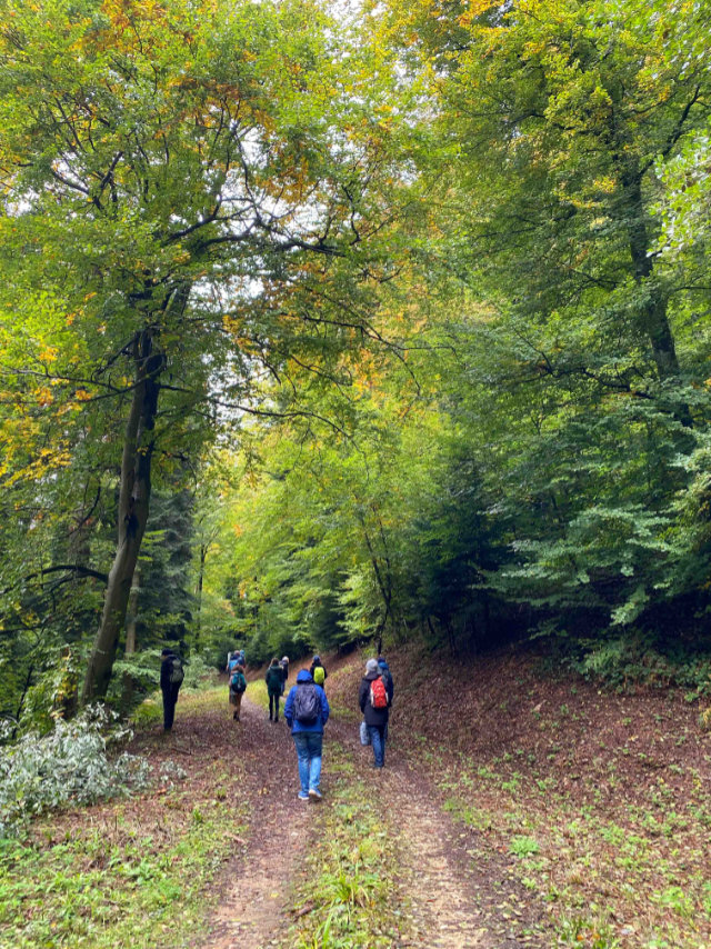 Shinrin Yoku - Waldbaden im Käppeledobel Bollschweil - St. Ulrich