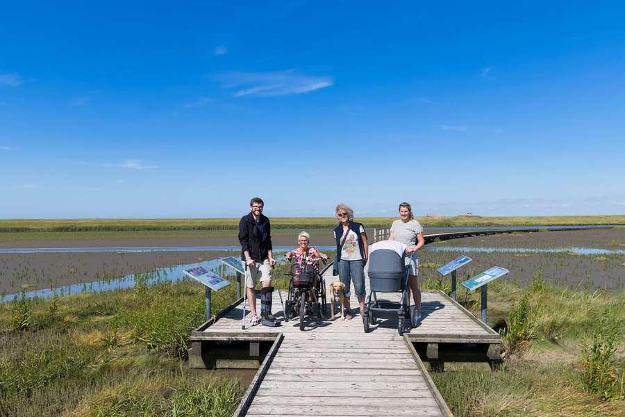 Natur-Hotspot mit lebenden Salzstangen und Wattknistern in der Nordseelagune entdecken