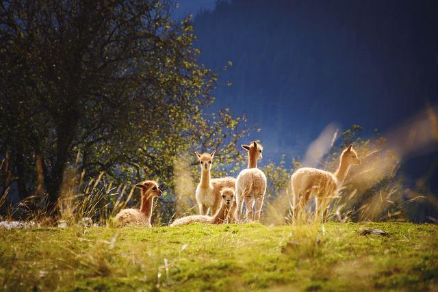 Begegnungen in Österreich: von Alpakas bis Ziegen