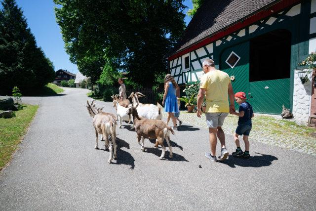 Mit Esel, Husky und Alpaka durch den Süden