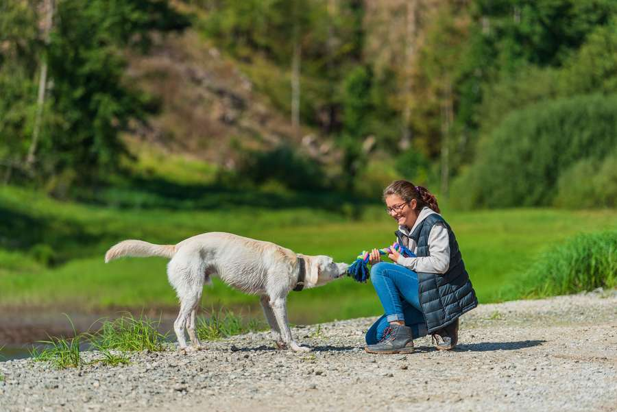 Ferienregion Oberharz - Wo Hunde gerne Urlaub machen